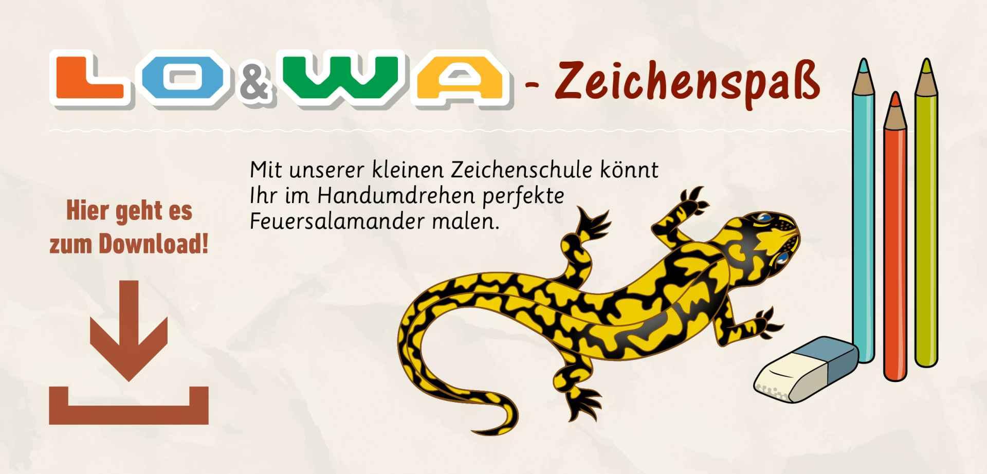 teaser_salamander_2020-2