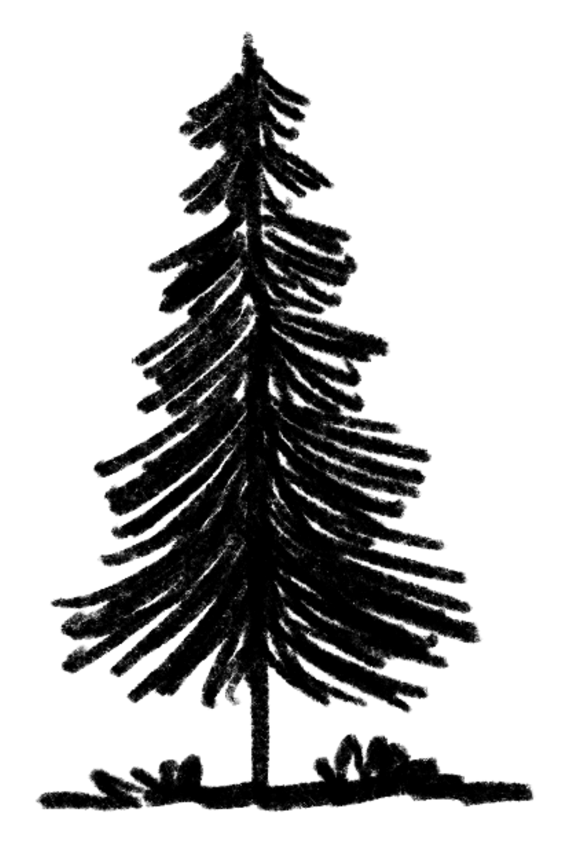 microadventure_illu_tree-2_illustration-clipping