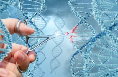 découverte du gène de l'endométriose