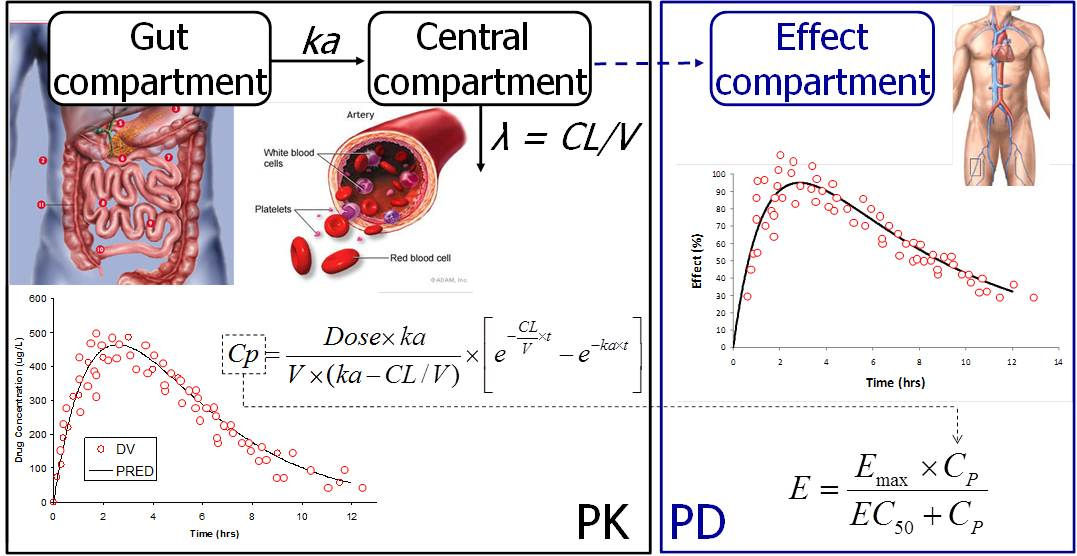 Illustration of pharmacokinetic (PK) and pharmacodynamic (PD) modelling
