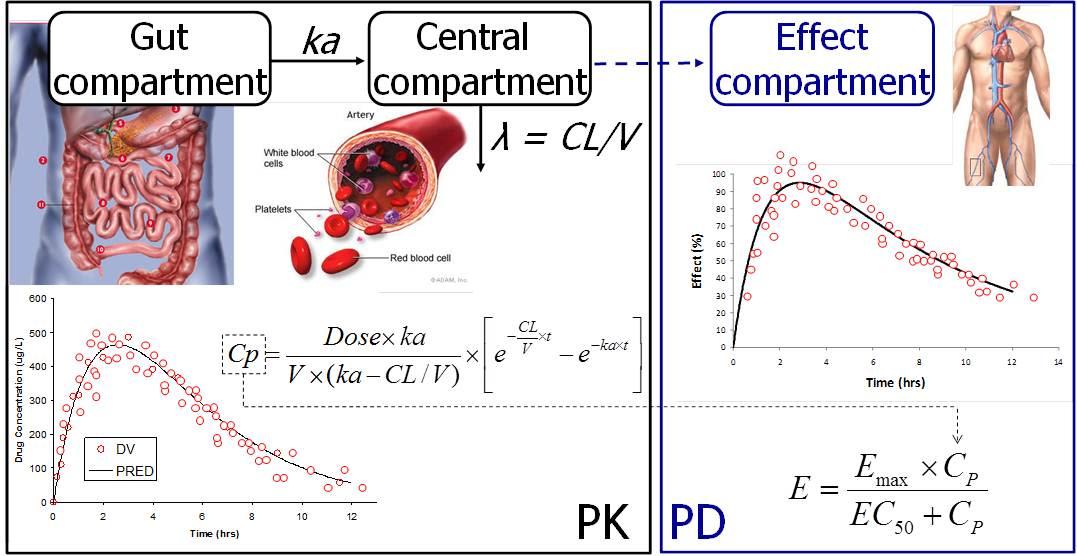 Illustration of pharmacokinetic (PK) and pharmacodynamic (PD) modelling