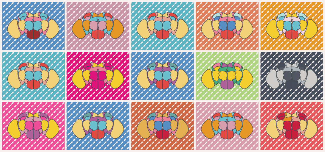 In 1962, Andy Warhol created the Marilyn Diptych, one of the most iconic depictions of human identity. Warhol's style inspired the Drosophila Diptych, where each fly brain is idiosyncratic. Christoph's recent work (Treiber and Waddell, Genome Research 2020) presents new evidence that transposable elements  generate functional diversity between individual flies from otherwise highly inbred strains.