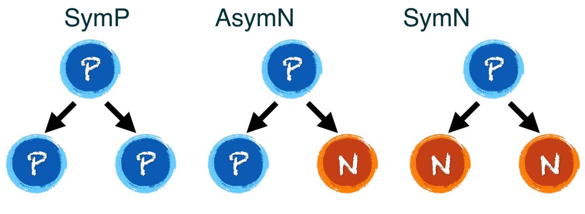 Models of Neurogenesis in Development