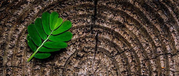 Green leaf on wooden stump