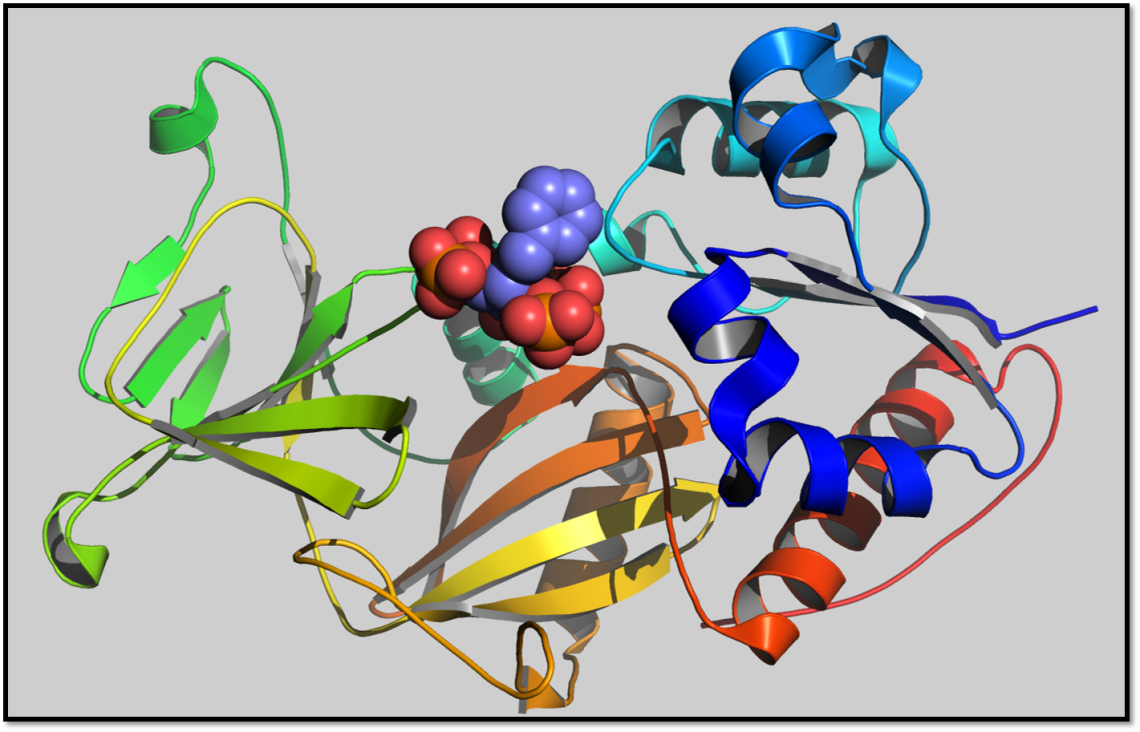X-ray crystal structure of the enzyme PPIP5K2 in complex with a synthetic inositol phosphate analogue reveals a new binding pocket, which could be a target for new drugs designed to inhibit PPIP5K2.