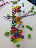 A brightly coloured 3D-printed model of DNA, showing the double helix and base pairs