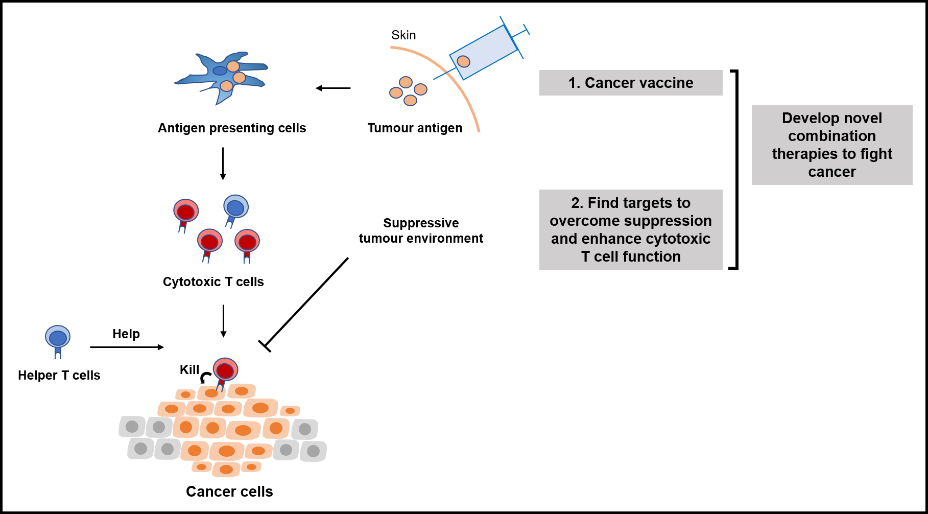 A schematic to illustrate the main research themes in the Van den Eynde lab at Ludwig Oxford. The work aims to increase the efficacy of immunotherapy by developing new combination cancer therapies, essentially along two lines. First, they aim to develop next-generation cancer vaccines that cause tumour antigens to be taken up by antigen-presenting cells to induce strong cytotoxic CD8+ T cell responses against specific tumour antigens, without inducing autoimmunity. Second, they want find targets to overcome the tumour suppressive environment and enhance cytotoxic T cell function.