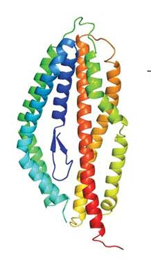 Crystal structure of the Plasmodium falciparum RH5 protein