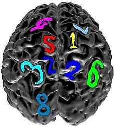 Numerical cognition study