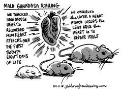 Mala Gunadasa Rohling