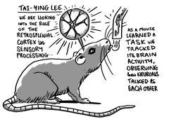 Tai-Ying Lee