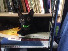 Black kitten on bookshelf