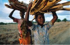 children carrying firewood