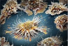 repetitive antigen stimulation