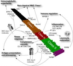 Overview of the human Major Histocompatibility Complex on chromosome 6p21