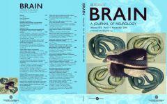 brain13311cover2_fit_900x600.jpg