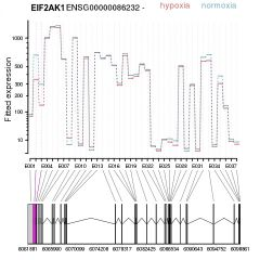Figure shows alternative splicing occuring in exons 2 and 3 of EIF2AK1 between normoxic and hypoxic conditions.