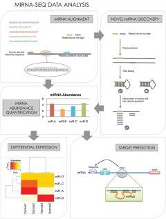 Flowchart fo miRNA-Seq data analysis. Source: Wikimedia Commons.