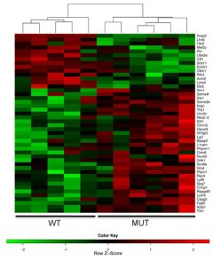 Figure shows differential expression of Foxp2 target genes in E16 developing mouse ganglionic eminences.