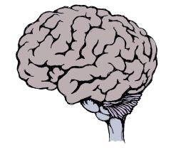 Newborn baby brain