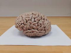 Brain 1 - side A.jpg
