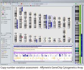 affymetrix-genechip-cytogenetics-array-3.jpg