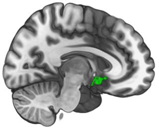 Prosocial brain