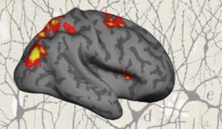 Stokes lab image