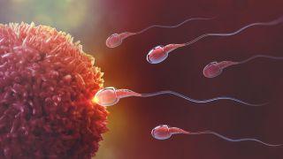 Reproductive Medicine & Genetics