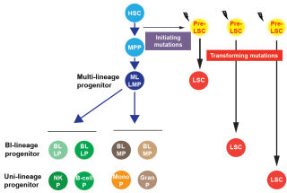 Vyas group normal and malignant haematopoiesis lab 25