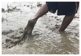 In early rainy season, behind tractors or buffalos, farmers are turning soil to make the paddy field a nice bed for semi-aquatic young rice plants to have their roots in cosy mud. In Thailand, migrant workers usually take care of this task, without awareness of exposure to soil-related bacterial infections such as melioidosis.