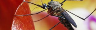 Mosquito zika nov 16 2