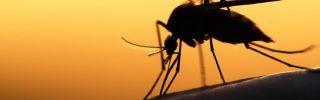 Zika research jan 16