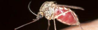 Mosquito apr18