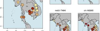 Artemisinin genetic resistance 2015