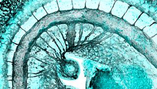 De bruijn group developmental haematopoiesis