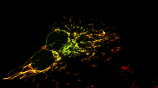 We study everything from the structure of ion channels and transporters right up to their role in behaviour and human disease