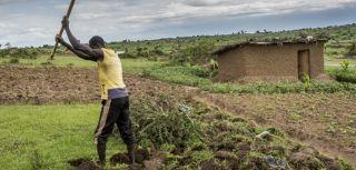 Refugee economies in uganda