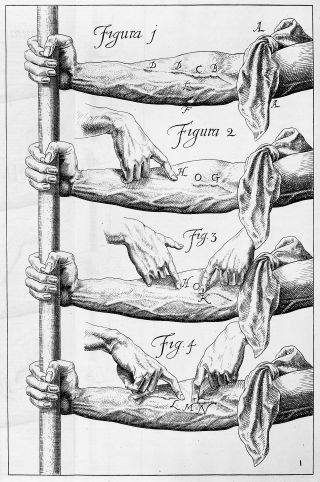 A page of experiments showing the veins in a series of arms