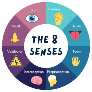 Round graphic showing the 8 senses