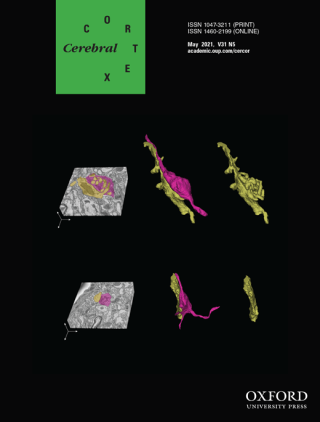 Cover Picture: Cross-sectional view (left) and 3D reconstruction (middle and right) of an axon from cortical layer 5 (magenta) and its connecting dendrite (yellow) in the stack volume taken with serial block face scanning electron microscopy of the mouse posterior thalamic nucleus in a wild-type (upper panel) and a Snap25 conditional knockout (lower) brains at P18. There are excrescences on the contact surface of the dendrite in the wild type brain (upper right), but not in the Snap25 cKO brain (lower right). See Hayashi et al. 2021. Maturation of complex synaptic connections of layer 5 cortical axons in the posterior thalamic nucleus requires SNAP25. Cereb Cortex 31(5): 2625-2638.