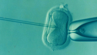 The programme uncovers a lack of supporting evidence for claims about fertility treatment, and is backed up by Oxford-led research reported in the BMJ.