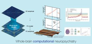 Whole brain computational modelling can be used to understand neuropsychiatric disorders