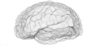 Brain wire frame1