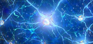 Brain cells 1