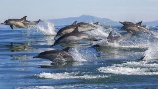 Dolphin brains show signs of Alzheimer's Disease