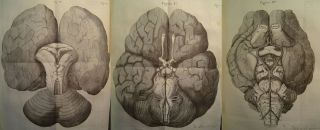 Images from Thomas Willis' 'Cerebri Anatome,' 1664