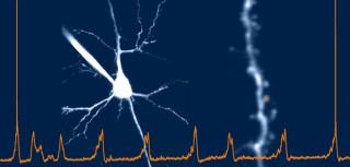 Studying the cellular and synaptic mechanisms underlying brain oscillations and plasticity
