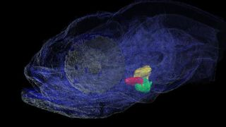 We are recognised internationally for our pioneering approaches to systems biology and to computational modelling of the heart