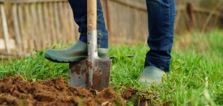 Most scots active through diy gardening and walking not sport